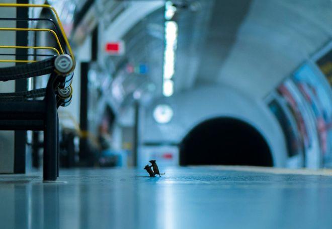 """صورة لفأرين يتشاجران في محطة للمترو في لندن تفوز بجائزة اختيار الجمهور في مسابقة للتصوير - صورة لفأرين يتشاجران في محطة للمترو في لندن تفوز بجائزة """"اختيار الجمهور"""" في مسابقة للتصوير"""