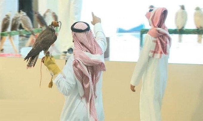 Ejp7rgeXgAAT3QZ - مزاد في الرياض لتشجيع الاستثمار في الصقور
