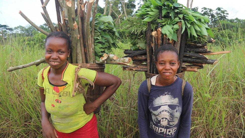 """٢٠٢١٠١١٣ ١٦٢٩٢٢ - خطة """"ثورية"""" لإنقاذ أكبر غابة في أفريقيا تُسهم في استقرار مناخ العالم.      #العبدلي_نيوز"""