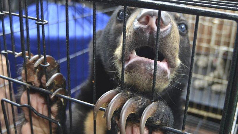 """٢٠٢١٠٣٠٦ ١٦٥٣٢٦ - #الصين تعتزم التخلص تماما من """"العادة السيئة"""" المتمثلة في أكل لحوم الحيوانات البرية.    #العبدلي_نيوز"""