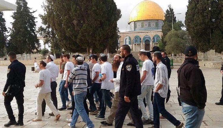 مئات المستوطنين الاسرائيليين يقتحمون باحات المسجد الأقصى بحماية شرطة الاحتلال. #العبدلي