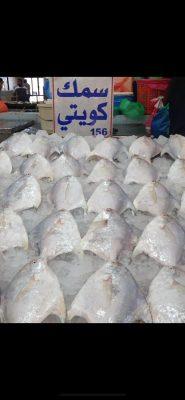 182003b8 8757 44f4 b1f5 8bdbd06e3cdb 185x400 - اتحاد الصيادين يجدد مطلبه بعودة مزادات الأسماك