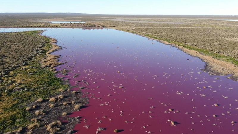 ٢٠٢١٠٧٢٦ ١٦٥٣٠٤ - بحيرة في باتاغونيا الأرجنتينية تتلون بالزهري بسبب مخلفات شركات صيد.  #العبدلي_نيوز