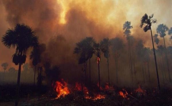 ٢٠٢١٠٧٣٠ ١١٥٢٣٨ - إصابة العشرات في حرائق غابات جنوب غربي #تركيا.  #العبدلي_نيوز