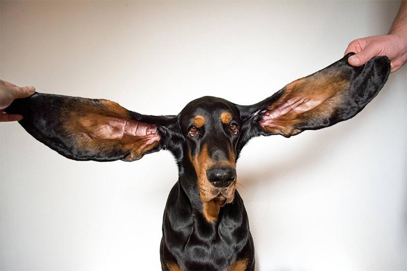٢٠٢١٠٩١٦ ١٨١٩٣٨ - #موسوعة_جينيس 2022 تتضمن أطول مراهق وأطول أذنين لكلب.  #العبدلي_نيوز