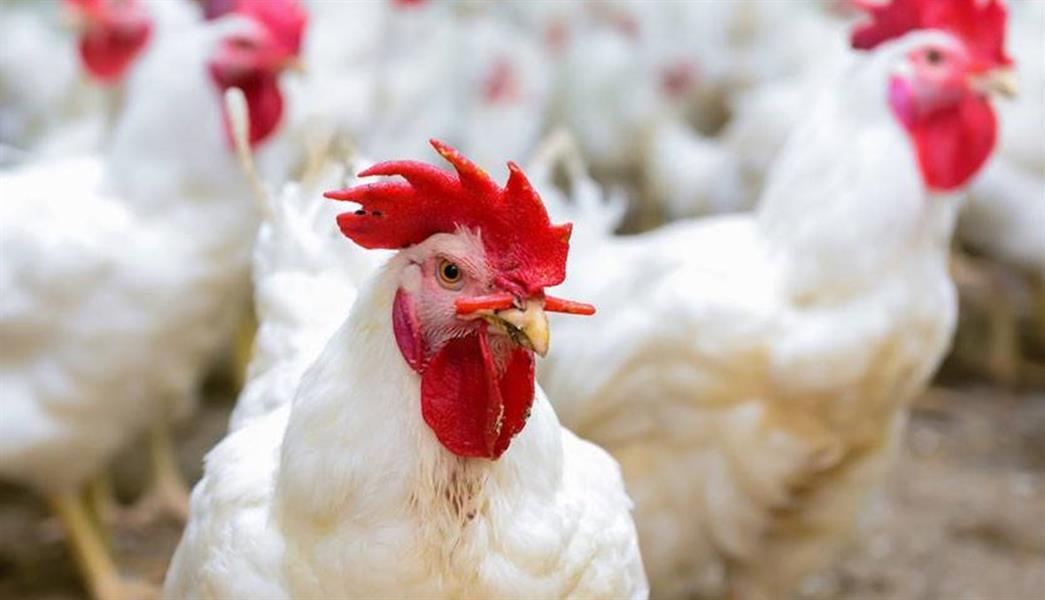 e4d1b9a8 a093 4931 abc9 a73fa9415051 - دراسة: تناول أكثر من 30 جراماً من اللحوم البيضاء يومياً قد يزيد من خطر الإصابة بالسرطان