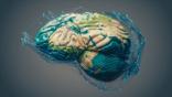 العلماء يحققون اكتشافا مذهلا حول أصل اللغة في الدماغ