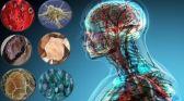 ثورة في الطب.. تقنية تتيح إصلاح الخلايا العصبية التالفة في الجسم