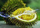 علماء يتوصلون إلى طريقة لتخزين الطاقة في مخلفات الفاكهة