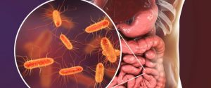 #دراسة تكشف العلاقة بين بكتيريا الأمعاء ومستويات فيتامين (د).      #العبدلي_نيوز