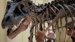 #التيرانوصورات أطاحت خلال نموها بأجناس ديناصورات أصغر حجما.   #العبدلي_نيوز