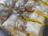 جمارك الشويخ: إحباط تهريب كمية من الكبتاغون في حاوية مواد غذائية.  #العبدلي_نيوز