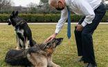 كلب بايدن المشاغب يتلقى تدريبا جديدا للتكيف مع حياته في البيت الأبيض.   #العبدلي_نيوز