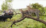 """امرأة تقود للمرة الأولى قوة حرس حديقة """"كروجر"""" الوطنية في جنوب إفريقيا.   #العبدلي_نيوز"""