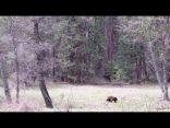 فيديو مخيف.. يوم توحشت الفئران في غياب الإنسان