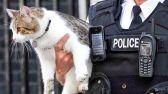 متلبساً.. الإطاحة بقط يهرب المخدرات إلى المساجين في بنما