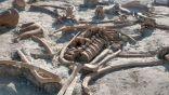اكتشاف 200 هيكل عظمي لحيوان الماموث المنقرض في المكسيك