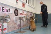 """أوروبا.. استخدام الكلاب بدلاً من """"المسحة"""" لمعرفة المصابين بكورونا في المطارات… شاهد التفاصيل"""