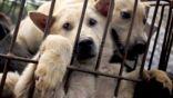 """بدء موسم """"تناول الكلاب"""" في كوريا الجنوبية"""